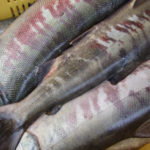 鮭の加工も佳境を迎えました~笹川流れ