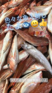 カナガシラと小鯛とシオイタチウオ